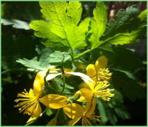 Atelier Plantes Essences